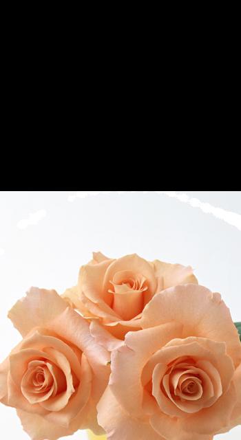 Les fleurs R